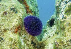 podvodni-mljet-4
